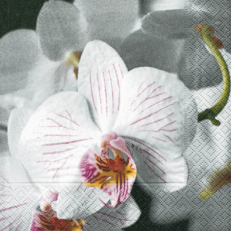 servietten sch ne orchidee 21037 ganzjahres servietten. Black Bedroom Furniture Sets. Home Design Ideas