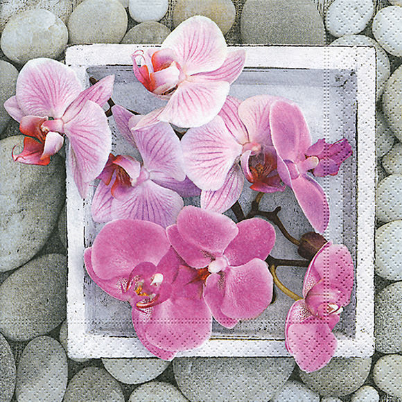 Napkins - Orchids in Frame - 200245 - Everyday - Napkins - by Paper