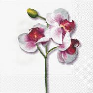 Napkins - Classic orchid white
