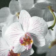Napkins - Beautiful orchid