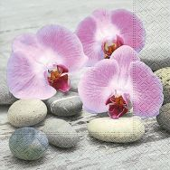 Cocktail napkins - Orchids on stones
