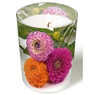 Candle in a glass - Pompon dahlias