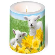 Candle - Cute lambs