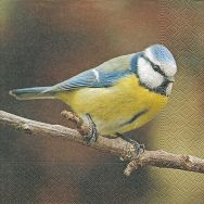 Napkins - Cute blue tit