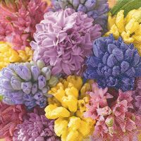 Cocktail napkins - Colourful hyacinths
